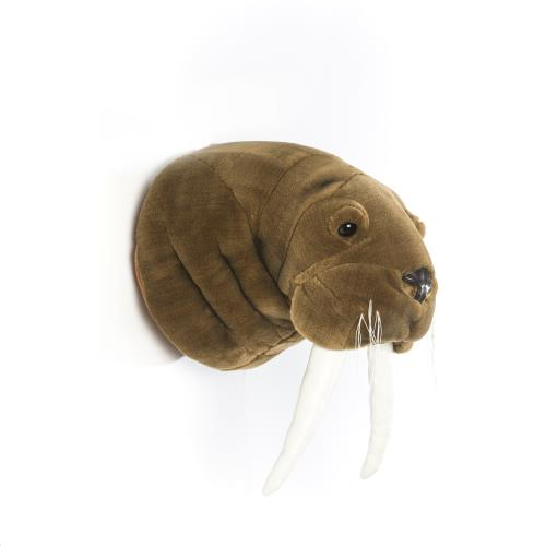 Trophy walrus Jacob